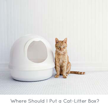 Where Should I Put a Cat-Litter Box?